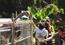 11月23日 - 動物農莊親子遊