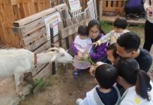 3月27日 - 學前班戶外學習日︰參觀農莊